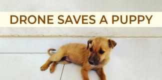 puppy dog rescue